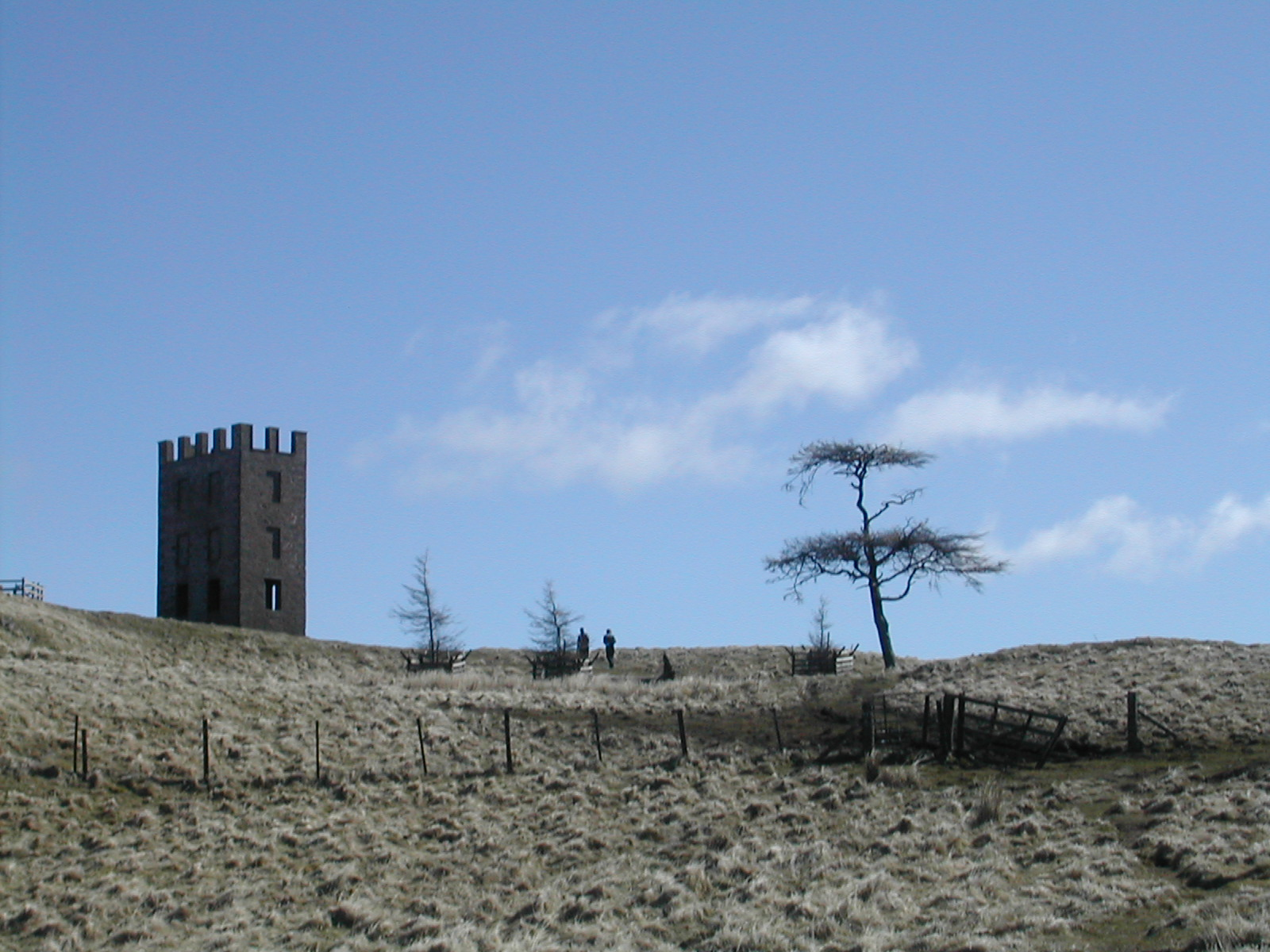 Kinpurnie tower and trees